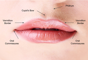 Lip Augmentation Diagram | Desert Hills Plastic Surgery Center